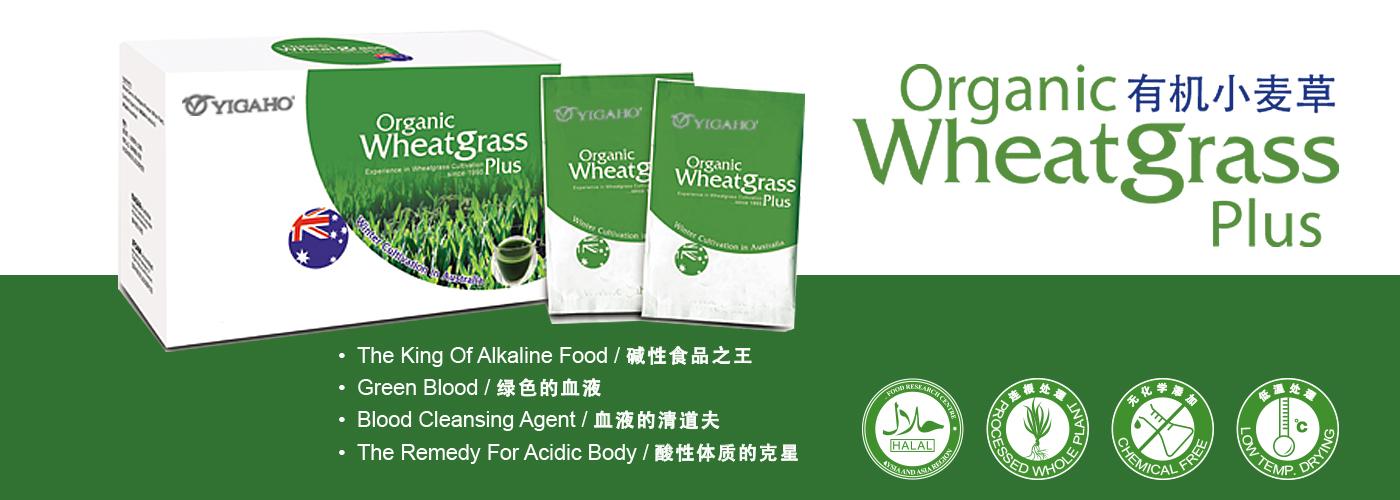 wheatgrass plus